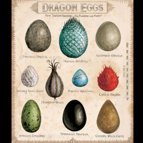 HP1_DragonEggs-large